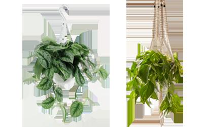 home plants hanging