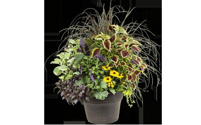 seasonal flowers potted
